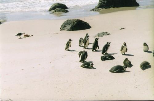 pinguini9.JPG
